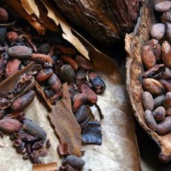 Eurochocolate: cioccolato e non solo