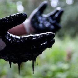 I nuovi delitti ambientali